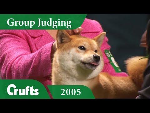 Japanese Shiba Inu wins Utility Group Judging at Crufts 2005