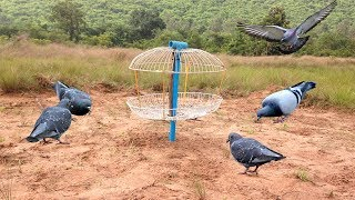 Awesome Quick Bird Trap Using Electric Fan Guard And PVC - How to Make Bird With Water Work 100%