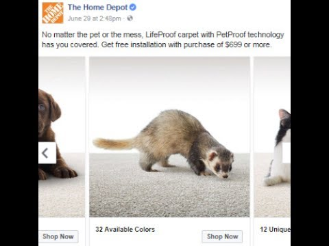 Joey the Home Depot Ad Ferret!