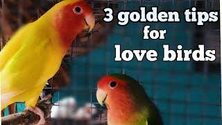Love Bird Care - 3 Golden Tips( In Hindi/Urdu And English)