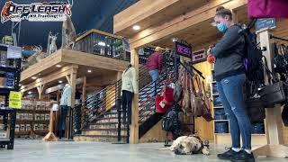 Sydney | 6 Month Old English Mastiff | Best Dog Trainer Cleveland, Ohio | Off Leash Obedience