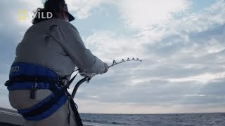 Walczył z tuńczykiem próbując zmęczyć przeciwnika! [Z wędką na olbrzymy]