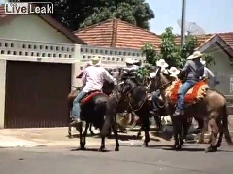 Video Pit Bull attacking horses and donkeys