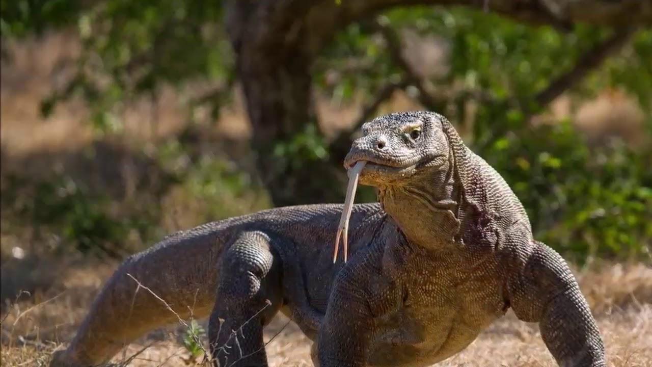 Look This, Komodo Islands Jurassic Park Indonesia - YouTube