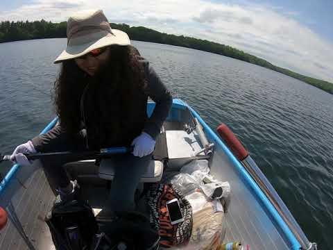 Ruben And Lily's Brown Trout,  Rye Lake