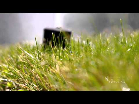 Managing Lawn Water to Prevent Disease | From the Ground Up