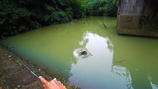 【衝撃映像】なぜか逃げない巨大魚。こんな釣れ方アリ?笑