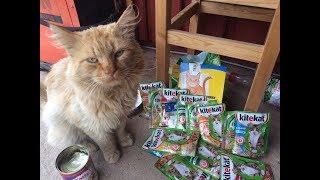 Сколько пакетиков может съесть кот за один раз? Идем на рекорд!