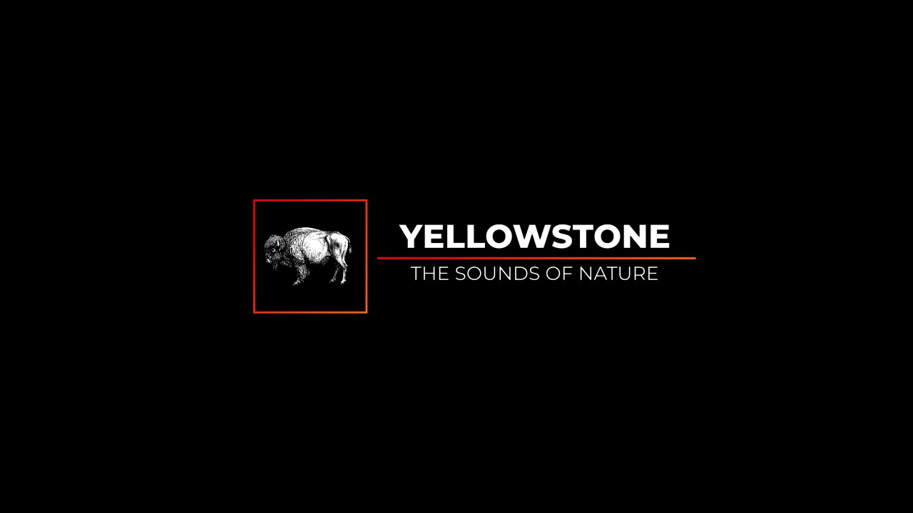 My Rode Reel 2020 - Yellowstone: The Sounds of Nature