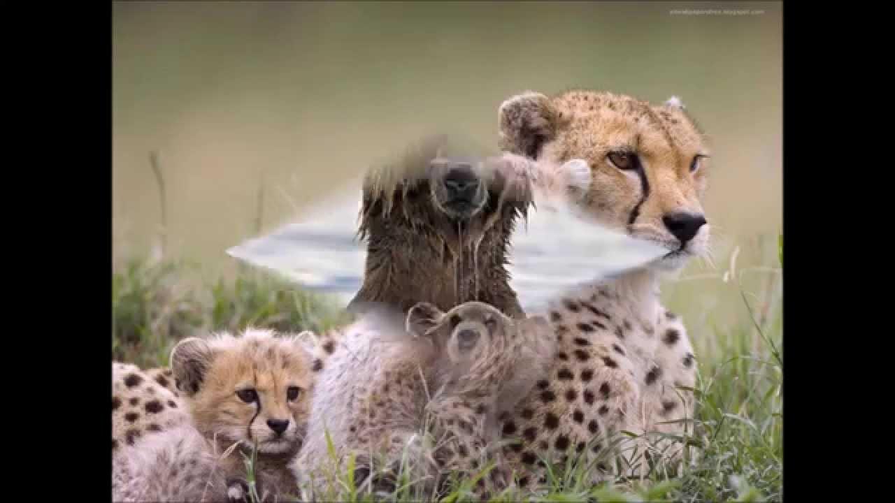 Favori Nos amis les animaux - YouTube JH75