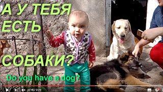 ВОЖАК СТАИ. Leader of the pack. РЕБЁНОК И СОБАКИ.Odessa.