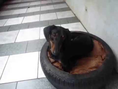 Super Cama de Pneu para cachorro - YouTube CW88