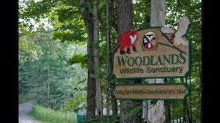 Woodlands Wildlife Sanctuary Documentary, Minden, Ontario - Animal Rescue Canada