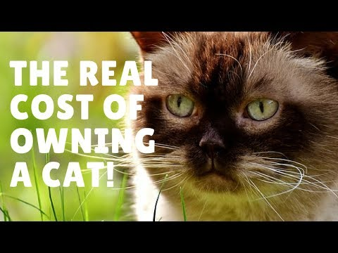 How Much Does Owning A Cat Cost?