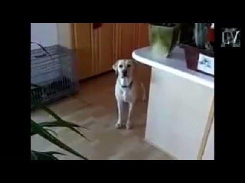 Пёс приносит пиво=)