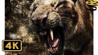 Китай против Саблезубых Тигров | После нашей эры | 4K ULTRA HD