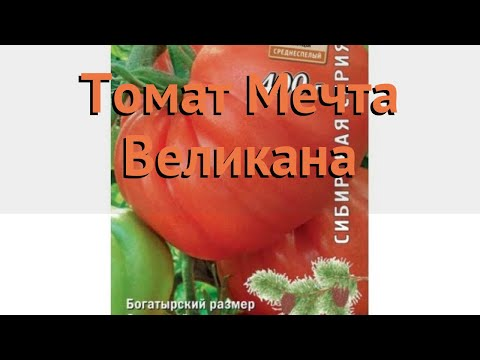 Томат обыкновенный Мечта Великана 🌿 обзор: как сажать, семена томата Мечта Великана