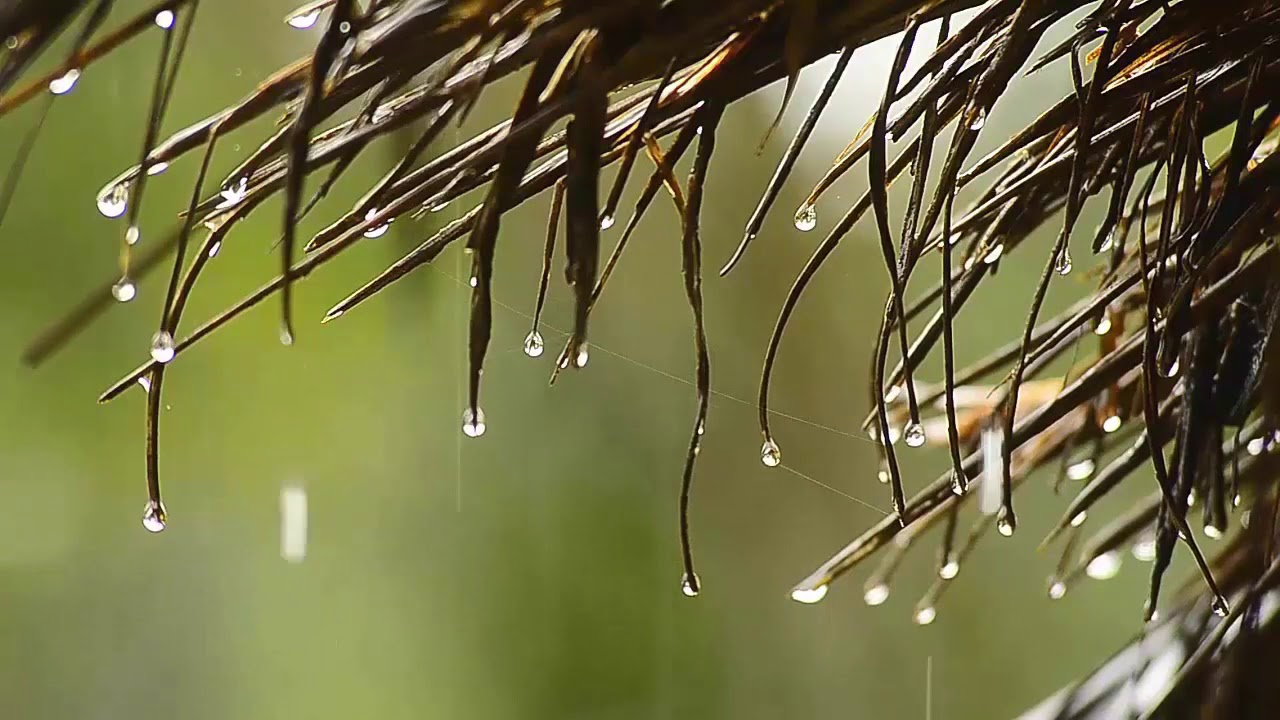 Música de piano relajante y sonidos de lluvia suave: Escuche dormir por 5 minutos