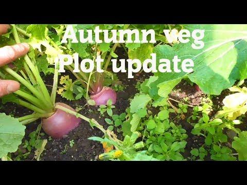 Allotment Diary : Autumn Veg Plot Tour & Container Potato Harvest