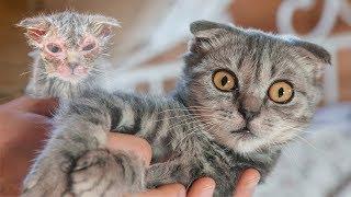 Фильм который должен посмотреть каждый чтобы понять кое что важное  animal shelter rescues kitten