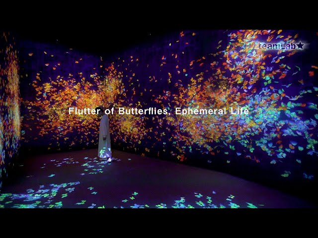 Flutter of Butterflies, Ephemeral Life