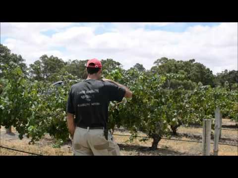 Elderton Wines' Australia Day Message 2016