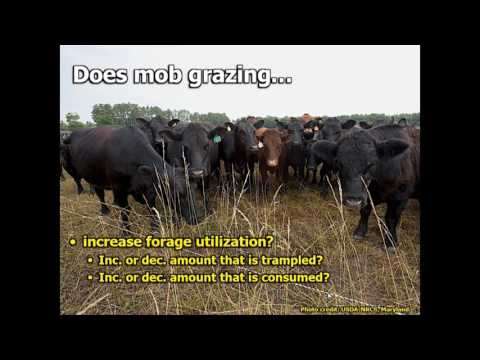 Mob Grazing: Facts, Fiction, And Questions