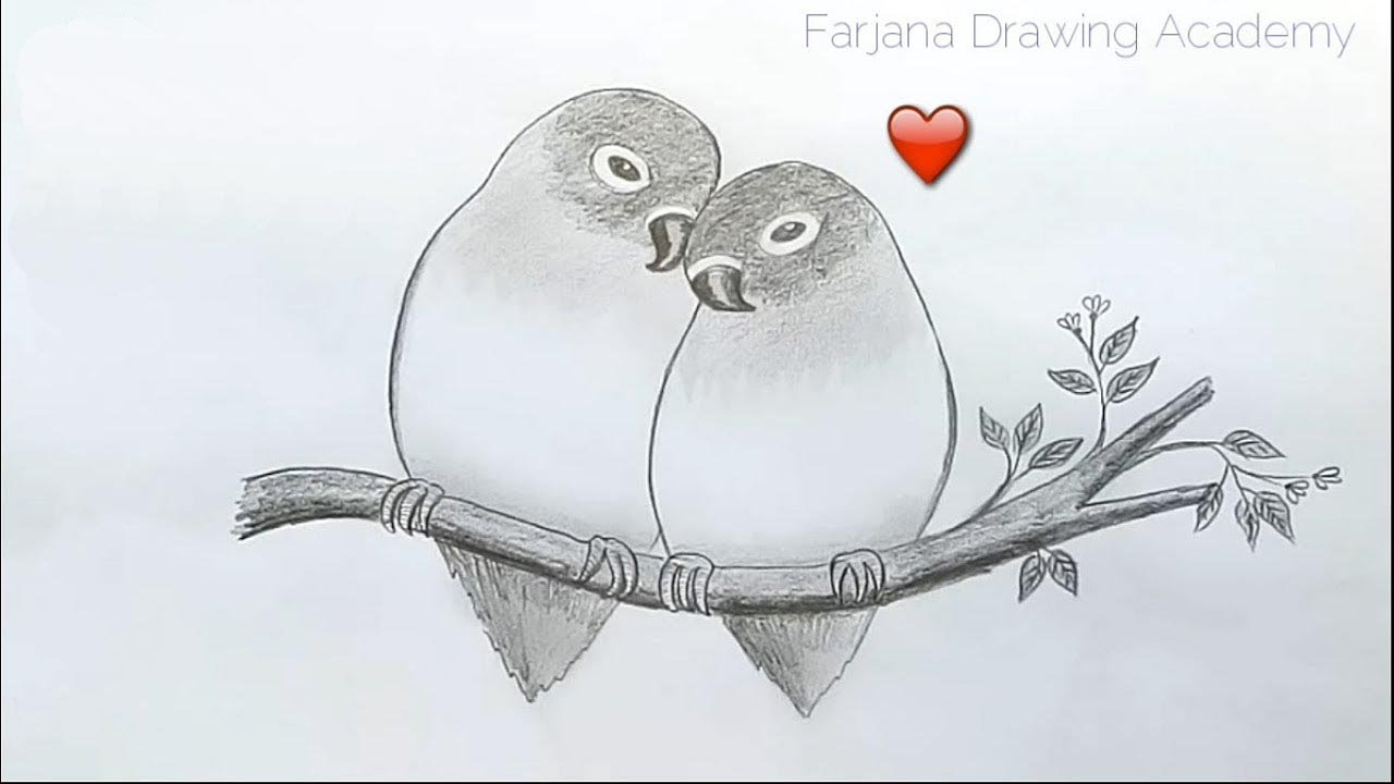 How to draw two parrots in love by pencil sketch