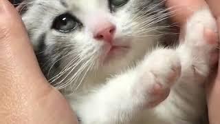 Foodie XiaoMan 超萌小吃貨~小蛮殿下送给太皇的生日禮物🎁🐱💖👀 #kitty #baby #eatingmachine  #food  #小蛮 #xiaoman