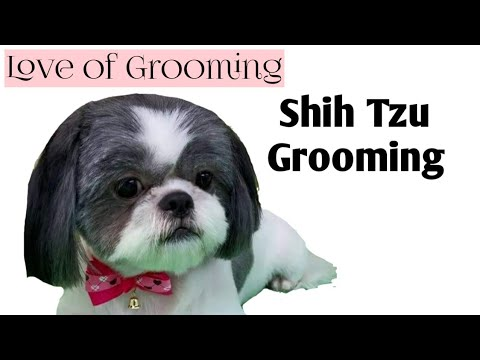 Grooming A Shih Tzu Basic Clip Youtube