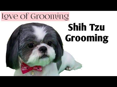 Grooming a Shih Tzu - Basic Clip
