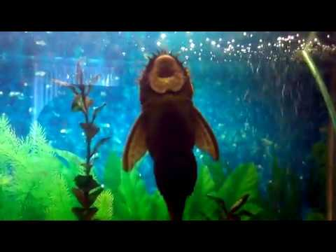 Смешные рыбы (26 фото + анимации) - Приколы www