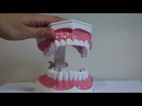Gentle Care Dentistry - How to Brush and Floss Your Teeth