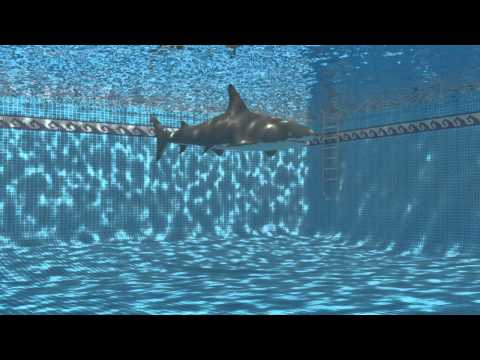 Shark in swimming pool.