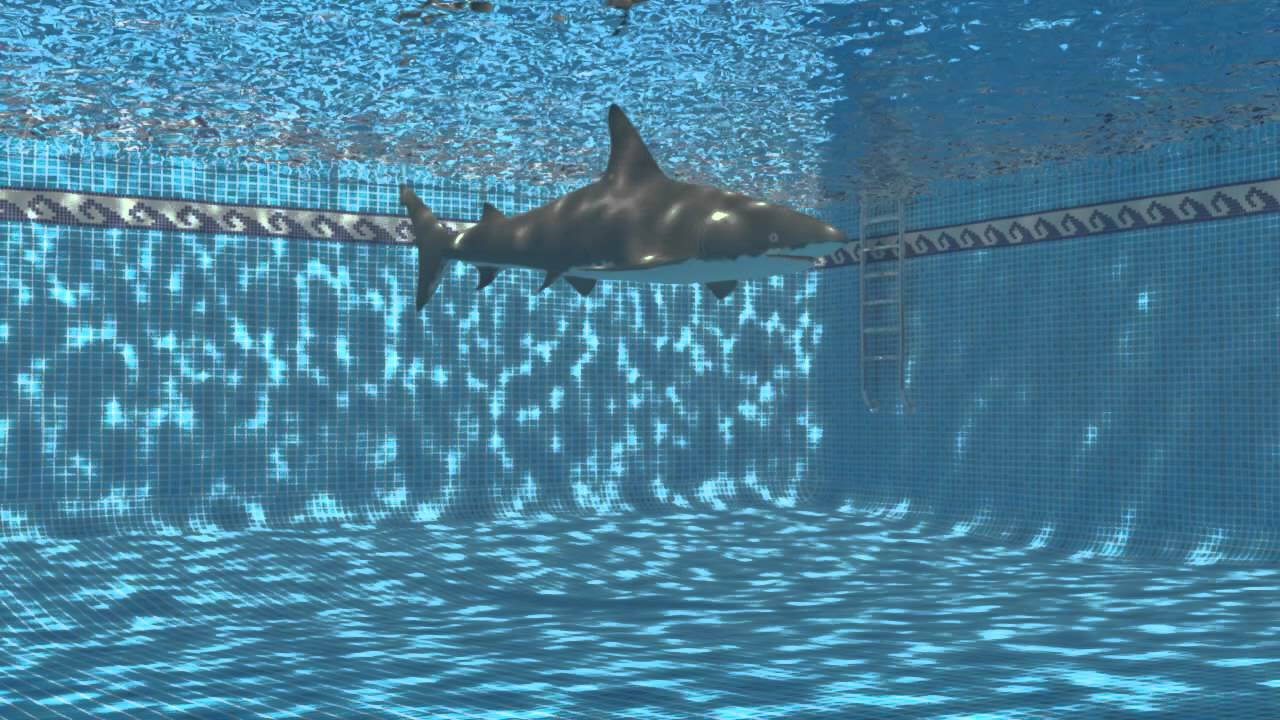 Image result for shark in pool