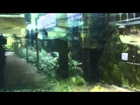 peces acuario zoologico cali aquarium fish en zoologico in zoo Wikipedia FULL HD
