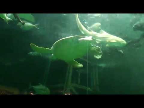 Very Cool Songkhla Aquarium - Thailand. Amazing!!!