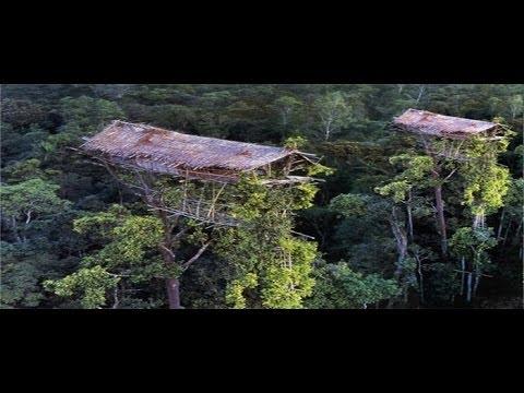 Rumah Diatas Pohon ~ Jejak Petualang