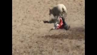 MUTTON BUSTING Thumbnail