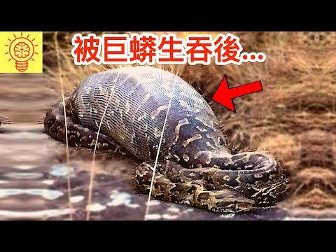 他活活被巨蟒生吞後....會發生什麼!?