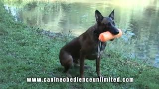 Maryland Dog Training   Water Training Lonny