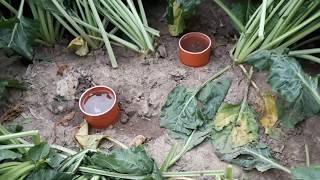 Utužení půdy - vsakovací pokus, Bučina, červenec 2017