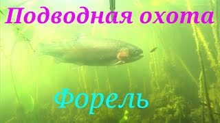 Подводная охота на форель