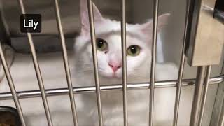 GOING TO THE ANIMAL SHELTER TO ADOPT A CAT thumbnail