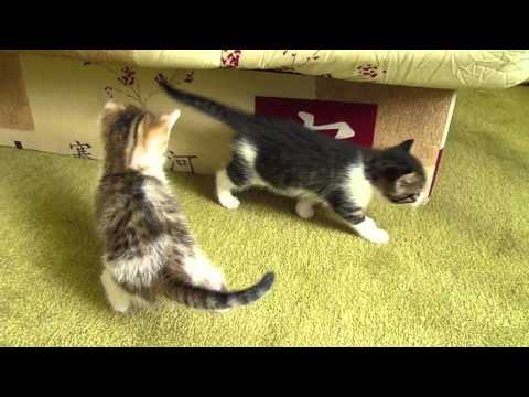 Chatons A Donner Sur Nantes Youtube
