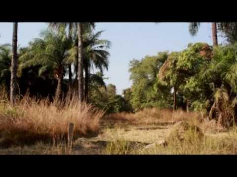 Bafuluto,Gambia