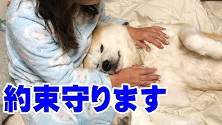 grandchild and Akita Inu 秋田犬は律儀で約束守ります 秋田犬そうすけ...