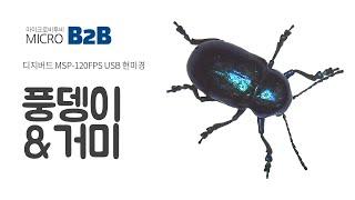 디지버드 USB현미경 MSP 120FPS 곤충촬영