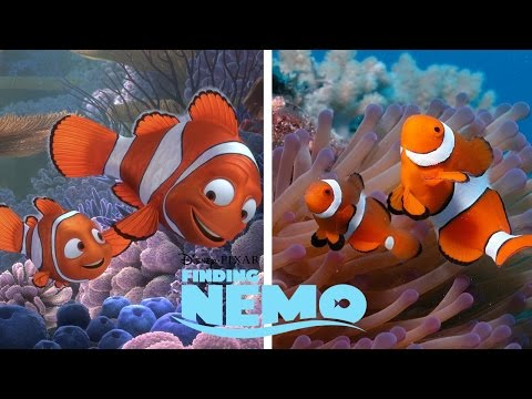 Disney Finding Nemo Characters in Real Life