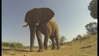Getting Stepped On By An Elephant